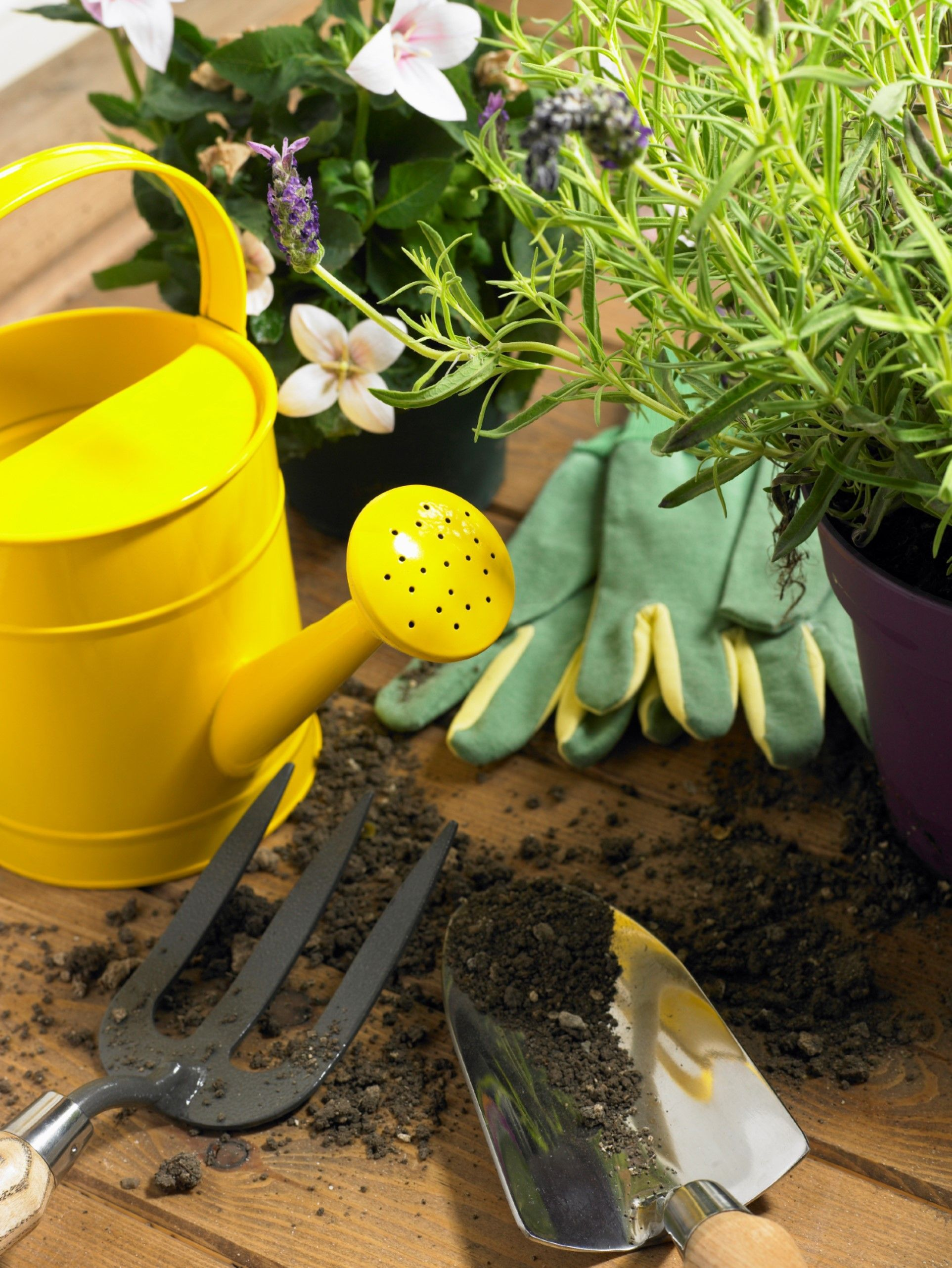Watering Your Plants With Watering Can Plants Water and Water