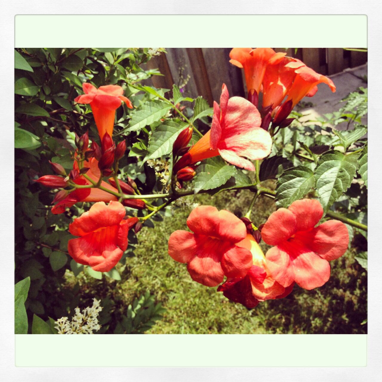 8⃣Beautiful bell flowers. Love how they look. The colour is great.