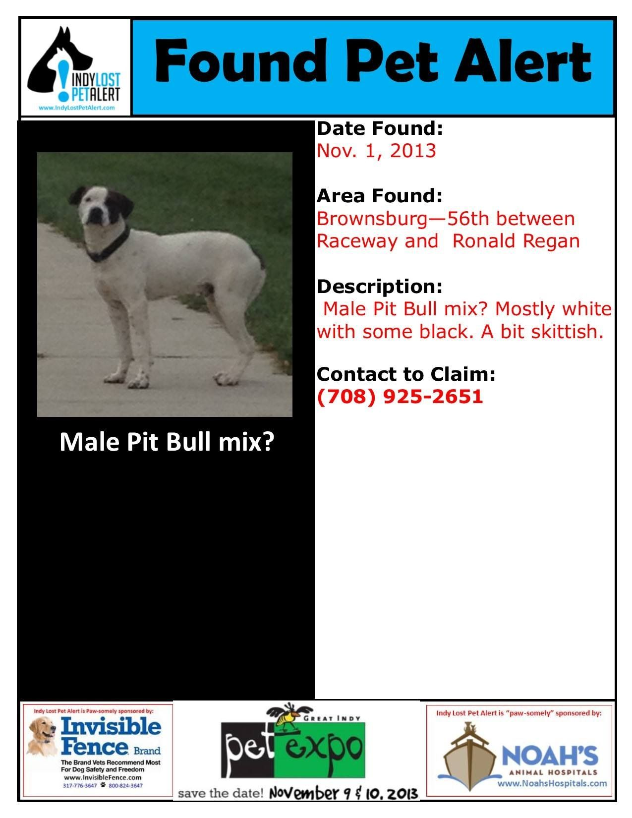Founddog 11 01 13 Indianapolis In Brownsburg Male Pitbull White With Black Markings 708 925 2651 Https Www Facebook Losing A Dog Pitbull Mix Pitbulls