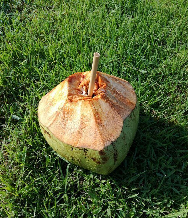 One Coconut A Day Keeps The Doctor Away Wir Lieben Frische Und