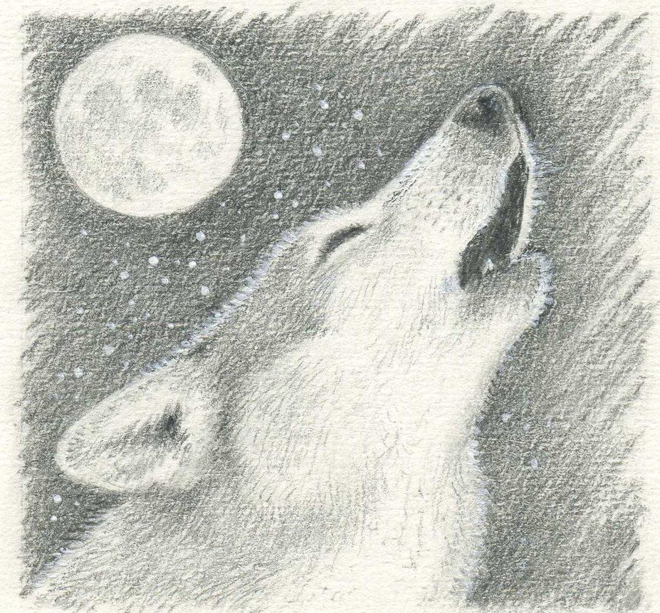 How To Draw A Wolf Howling At Moon Best Picture Of How To Draw A Realistic Wolf Howling At The Moon Wolf Howling At Moon How To Draw A Wolf Wolf
