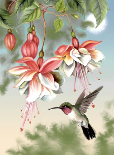 Fuchsia And Hummingbird Watercolor Hummingbird Bird Art Birds Painting