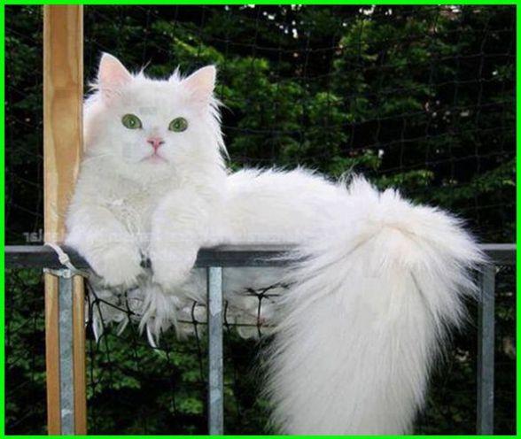 Gambar Kucing Lucu Imut Dan Paling Menggemaskan Sedunia Gambar Kucing Lucu Kucing Lucu Wallpaper Kucing