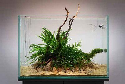 Simple Low Light Scape Aquascapes Fish Aquarium