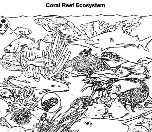 Coral Reef Fish, : Coral Reef Fish Gathering Coloring ...