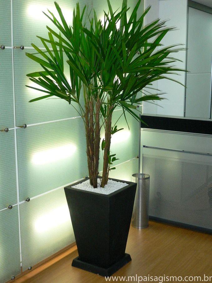 Construindo um Castelinho Plantas para sombra e Jardins internos - decoracion de interiores con plantas