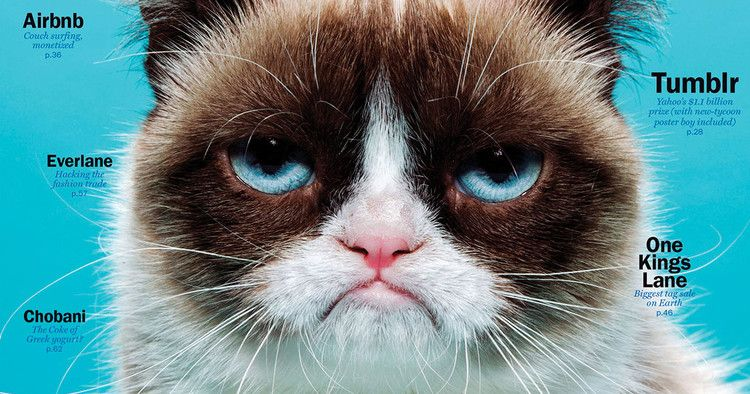 Grumpy Cat Has Died — Vulture Grumpy cat meme, Grumpy
