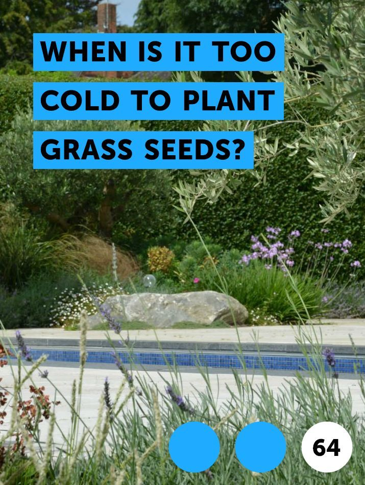 When Is It Too Cold To Plant Grass Seeds Zucchini Plants Plants Squash Plant