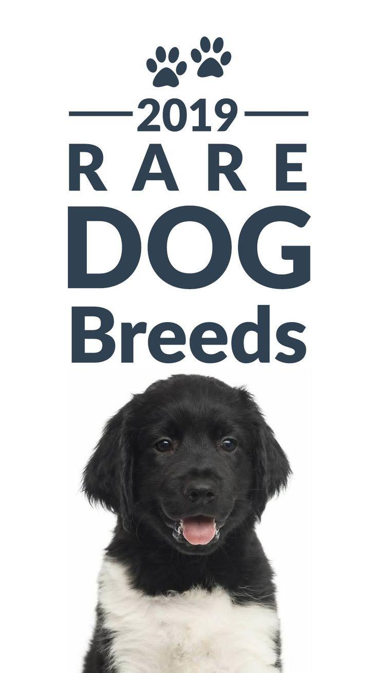 Rare Dog Breeds (With images) Rare dog breeds, Rare dogs