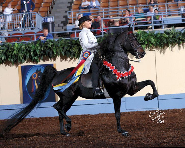 Pin On Horse Performance Saddle Seat Gaited
