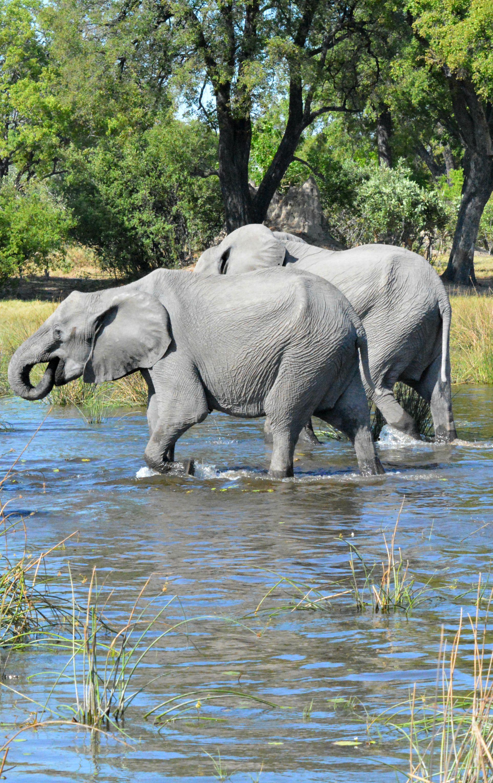 Home Decor Elephants The 25 Best Elephant Habitat Ideas On Pinterest African