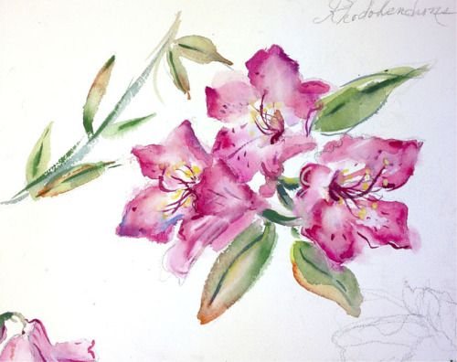 Azalea Watercolor Flower Painting Watercolor