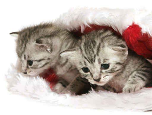 Joyeux Noel Animals Cats Christmas