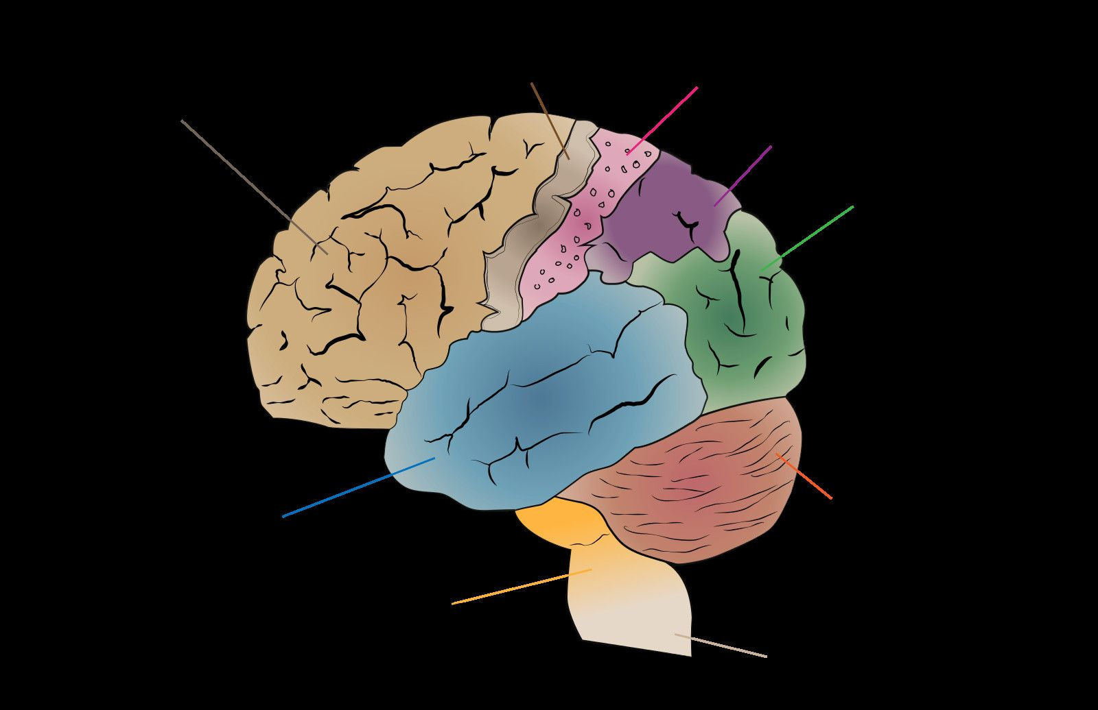 Labeled Diagram Of the Brain Awesome Diagram Of the Brain ...
