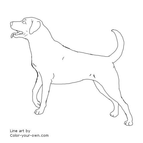Dog Labrador Retriever Coloring Page Dog Coloring Page Black Labs Dogs Lab Dogs