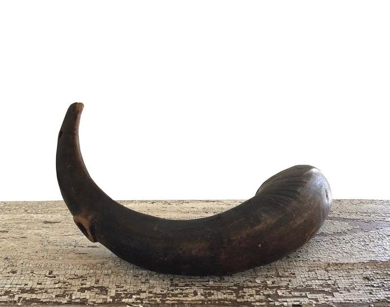17 Natural Ram S Horn Taxidermy Horn Large Etsy Large Animals Ram Horns Horns Decor