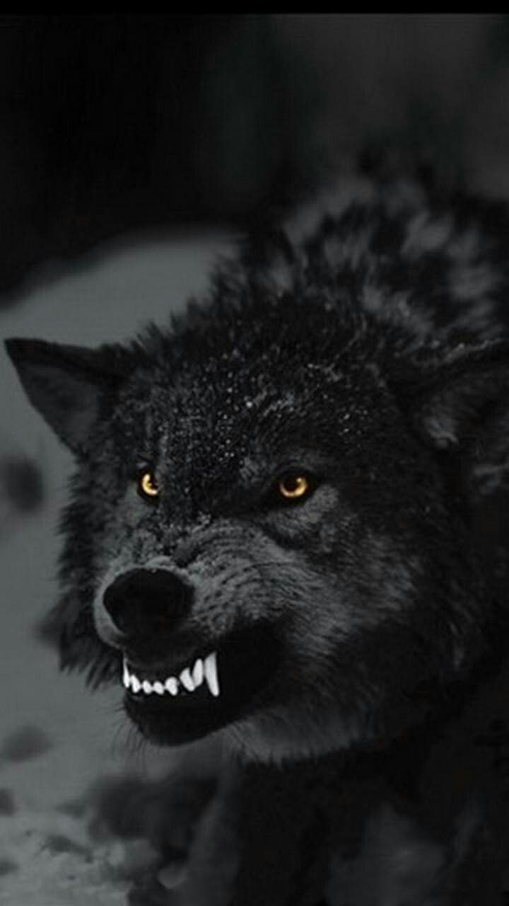 Bite away nothing will change | Heart stuff | Pinterest | Change ... for Angry Wolf Black And White  45ifm