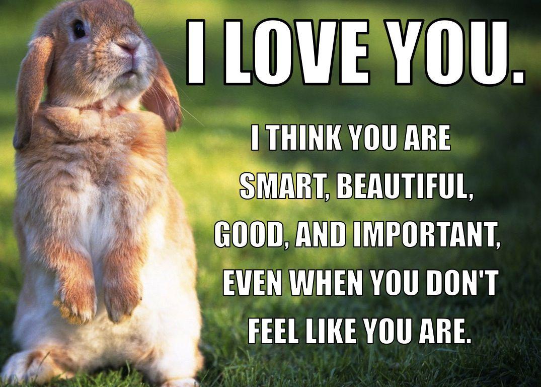 my sweet friend tweeted me this. awww. bunnies! Love you