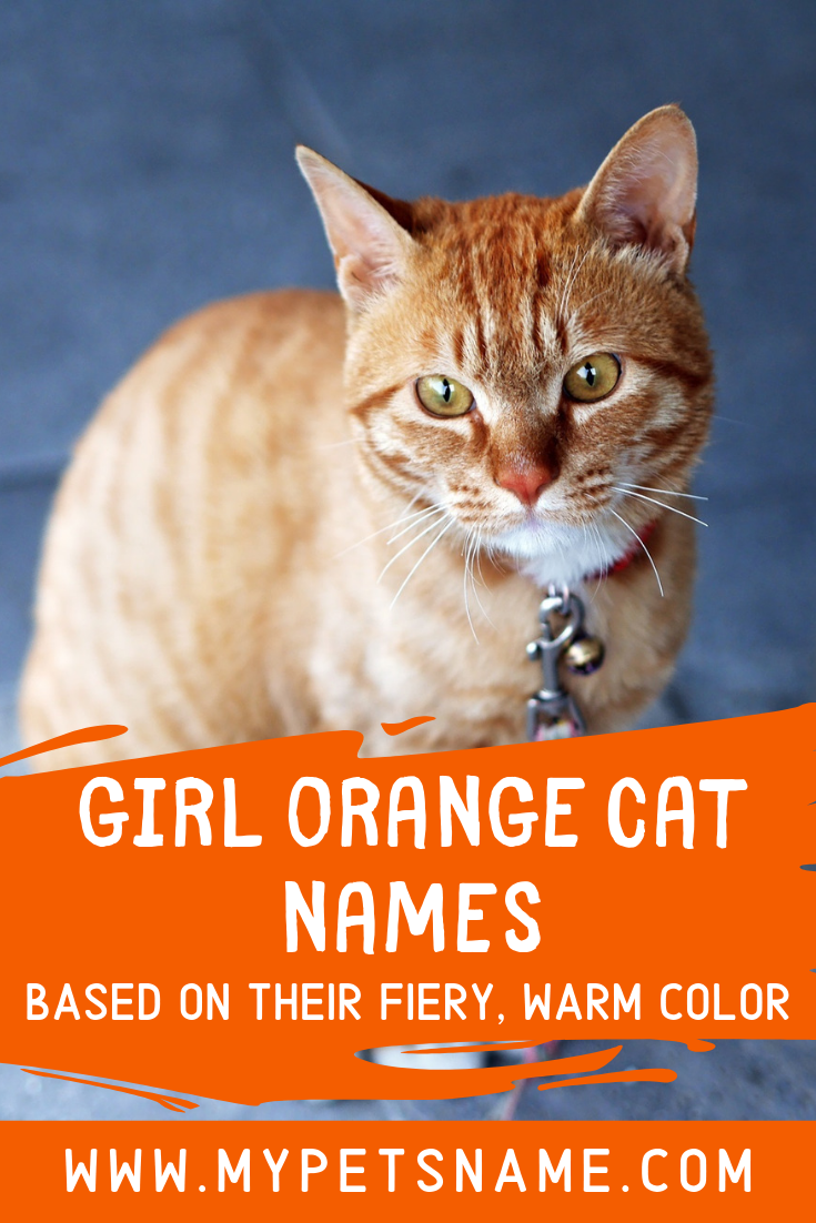 Pin On Cat Names