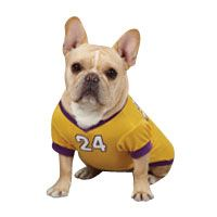 kobe bryant puppy jersey jersey on sale