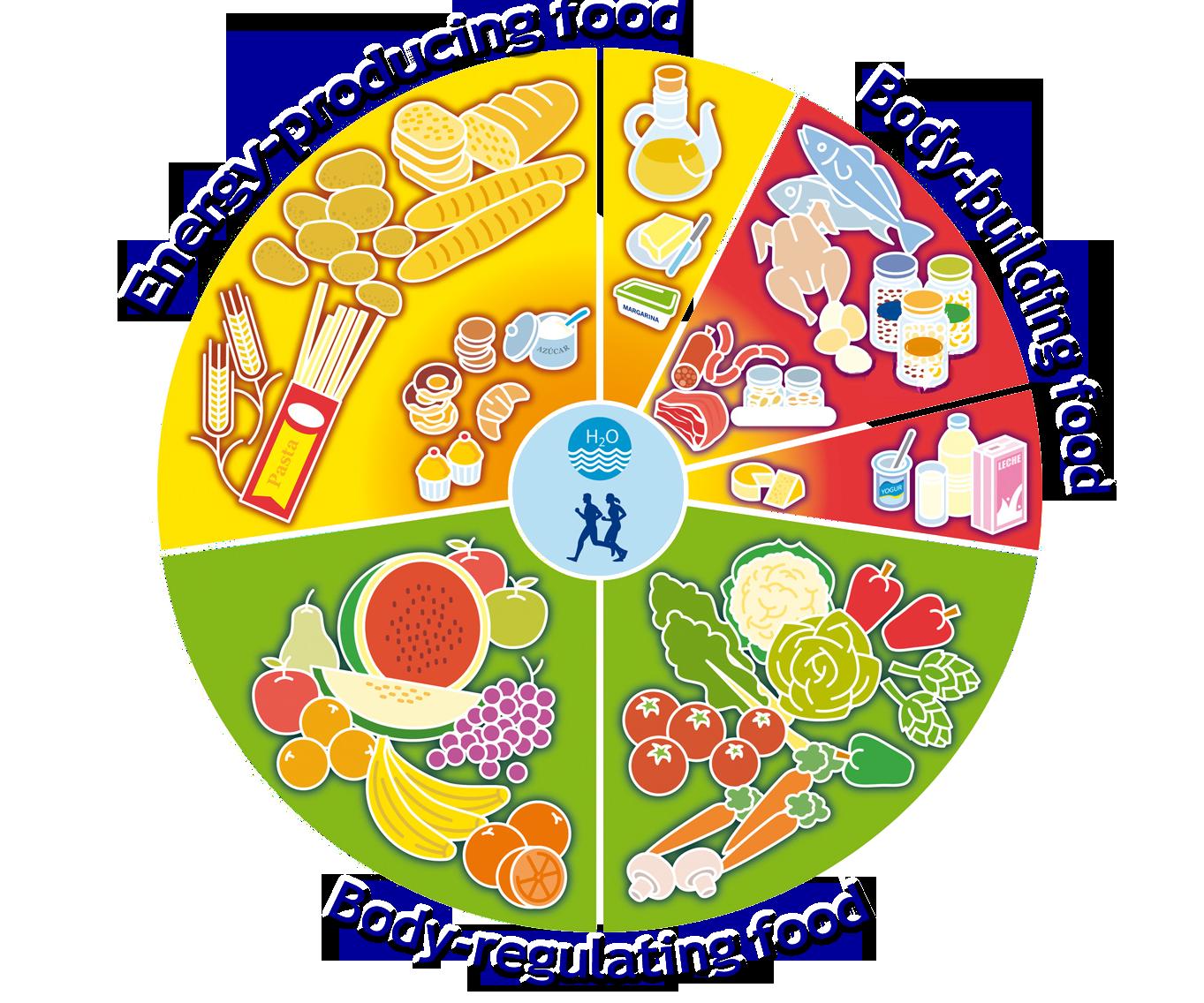 Food Wheel Energy Producting Food Body Building Food Body Regulating Food Food Pyramid Meals On Wheels Food
