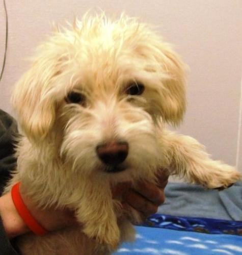 Adopt Evarista On Petfinder Poodle Mix Dogs Poodle Dog White Terrier