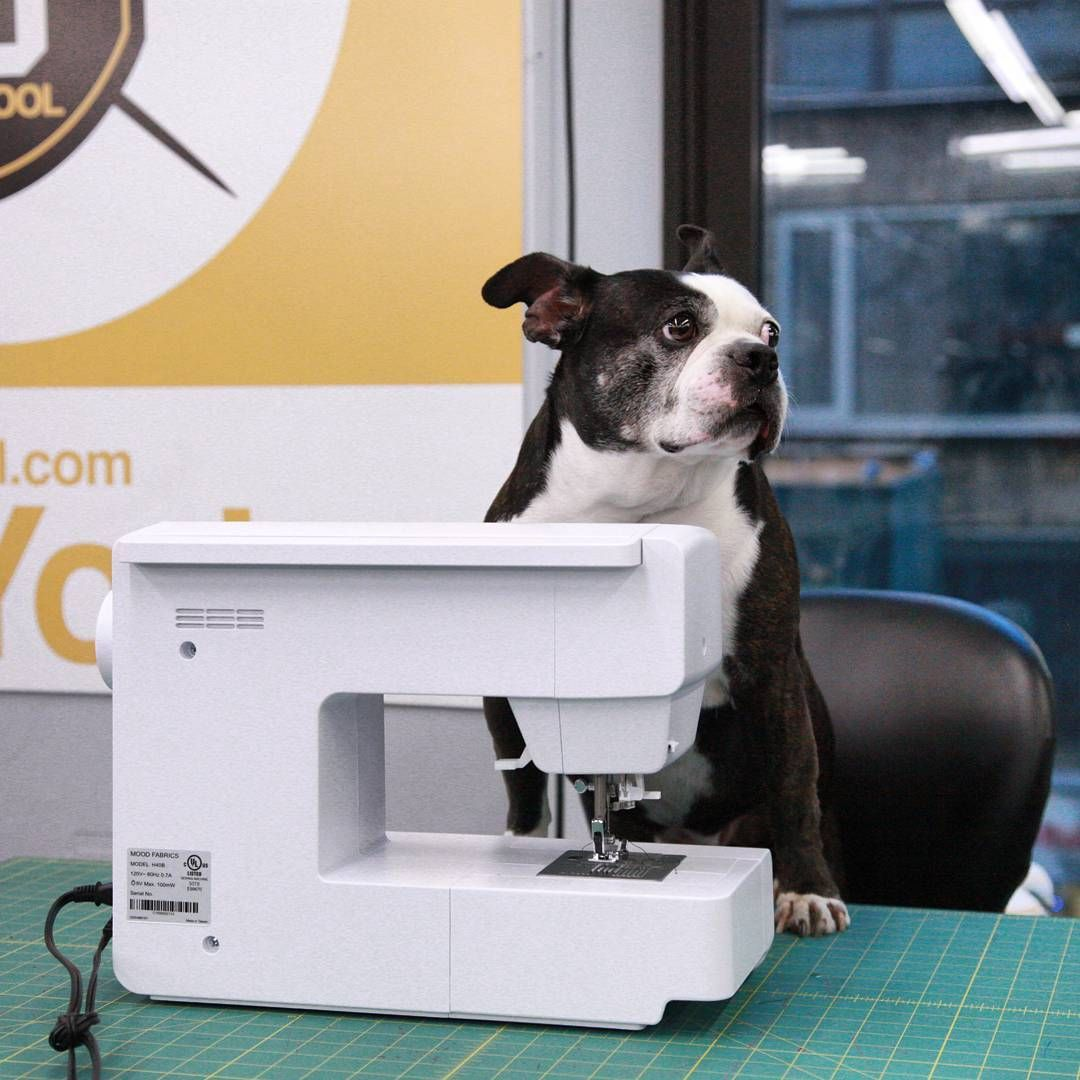 """""""Step one, we're going to cut out our patterns! Step two, everyone is going to give me puppy treats immediately."""" 🐶🐶 Have you taken a class at MoodU? Tell us about it in the comments!  #fabric #fabricshopping #moodfabrics #mood #fashion #instafashion #lovetosew #sewing #fashiondesign #summer #spring #inspiration #trends #moodu #school #class #learntosew #highfashion #luxury #garmentdistrict #style"""