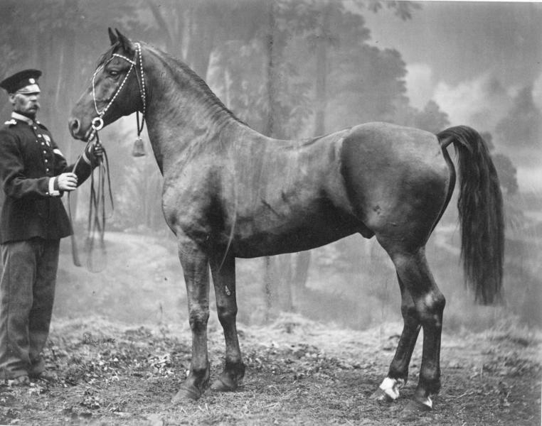 Картинка древней лошади