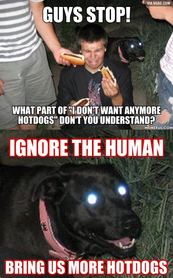 Ignore The Human Bring Us More Hot Dogs Funny Pictures Funny