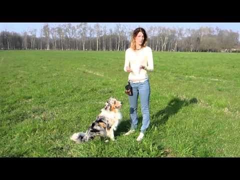 Addestramento/Educazione cani n°9 - Come insegnare lo STAND | Qua la Zampa - YouTube
