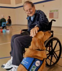 What are therapy dogs?