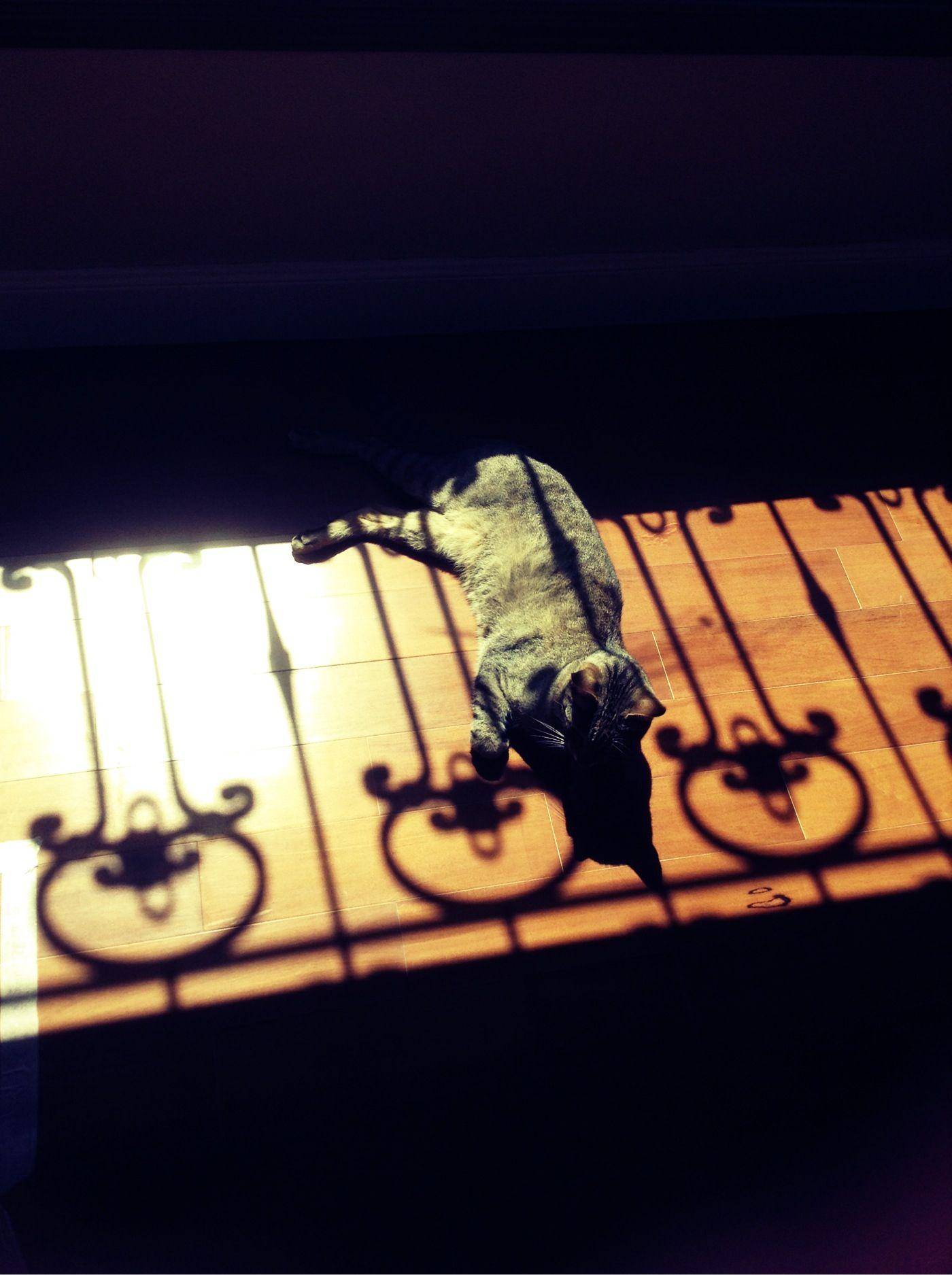 Bella imagen de mi gato tomando sol en casa