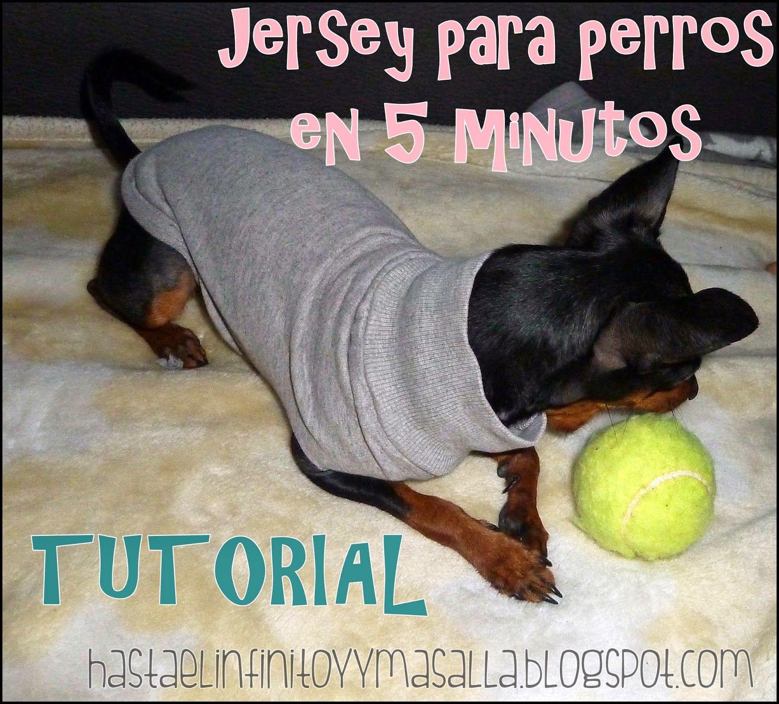 TUTORIAL: como hacer ropa para perros DIY, fácil y rápido. | Ropa ...