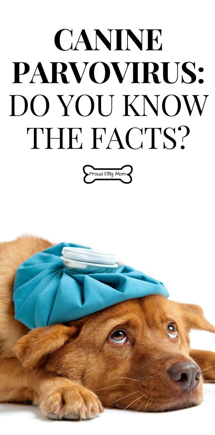 Pin on Dog Health + Diet