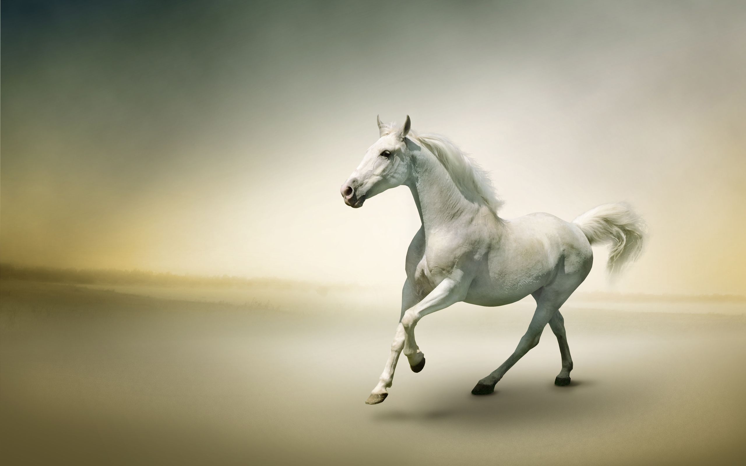 Download Wallpaper Horse High Definition - 9ef32bce49a56eec8711d0c3e2ea8141  Image_223488.jpg