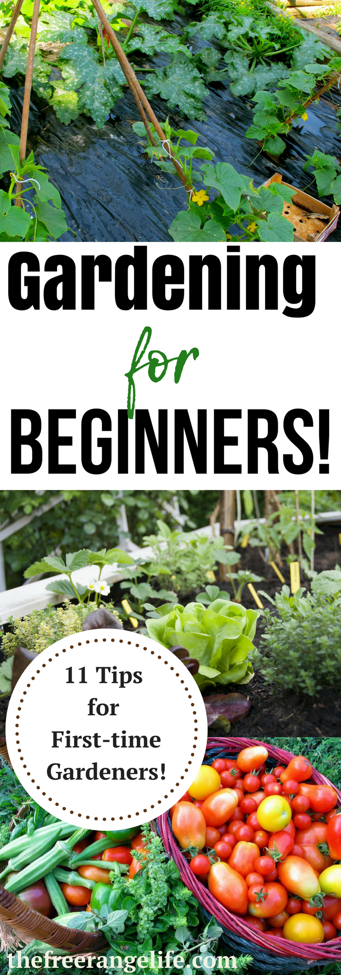 11 Tips For A Successful First Garden. Vegetable Gardening ...