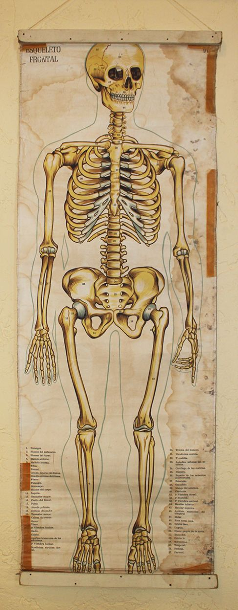 Vintage Medical Chart  Morbid Sensibility And Oddities