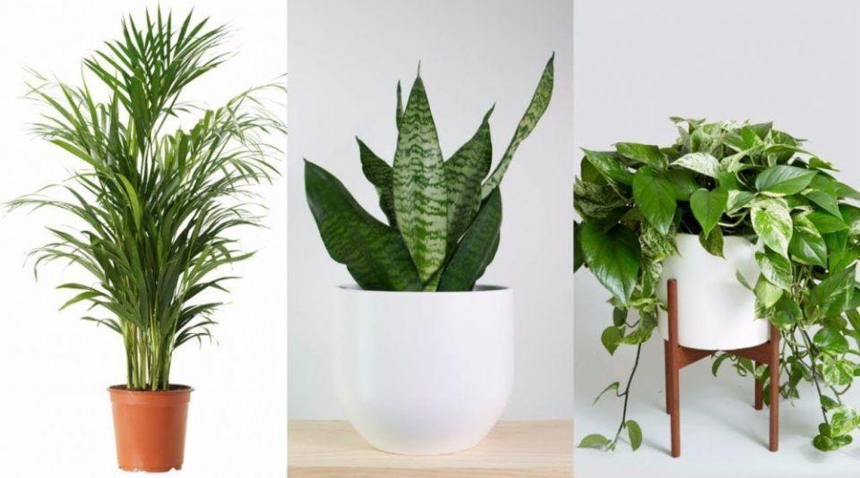 Ukryte Super Moce Roslin Najlepsze Rosliny Domowe Dla Ciala I Umyslu Dobre Wiadomosci Plants Indoor Plants Flowers