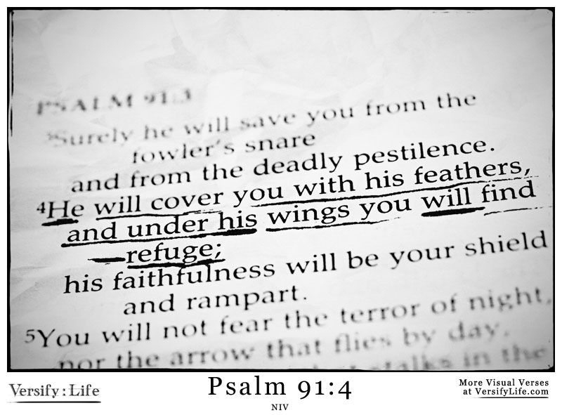 """""""He will cover you with his feathers, and under his wings you will find refuge; his faithfulness will be your shield and rampart."""" Psalm 91:4"""