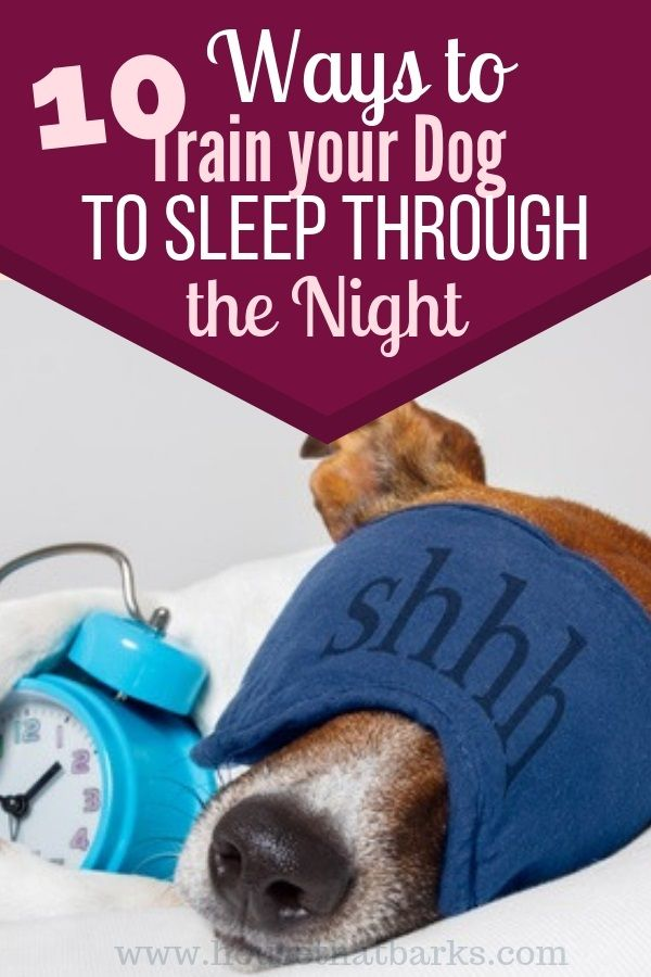 10 Fun Facts How To Get Your Puppy To Sleep Through The Night Sleeping Puppies Easiest Dogs To Train Dog Training