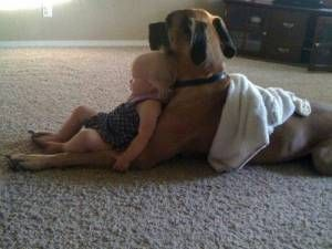 people who get rid of their dog when they have a baby make me sick. this is how it should be.......