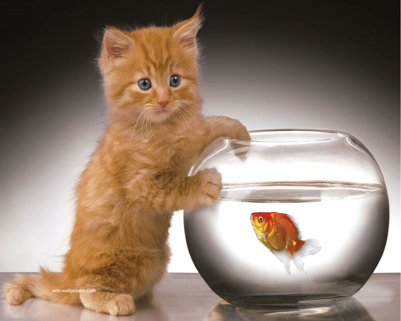 What I M Just Saying Hello Adorable Ginger Kitty And A Goldfish Kitten Wallpaper Kittens Kittens Cutest