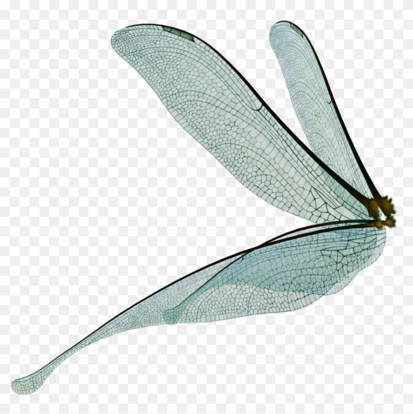 Pin By Makaila Killian On Dragonfly Kingdom Wings Png Dragonfly Wings Wings Drawing