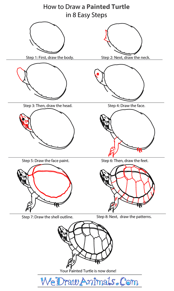 Výsledek obrázku pro how to draw turtles step by step