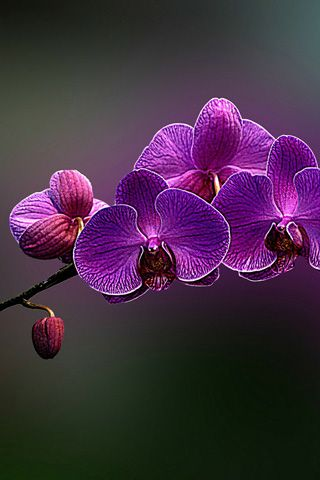 Purple+Spring+Flowers | Purple spring flowers iPhone wallpapers, Background and iPhone 4 ...