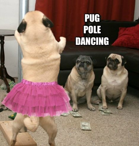 9ef757b35afd659d6e7653beb0c0b39e pug working the pole she works hard for the money so hard