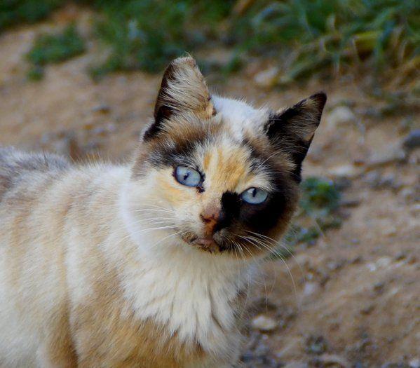 Pin De Joan Abbott Em Cats