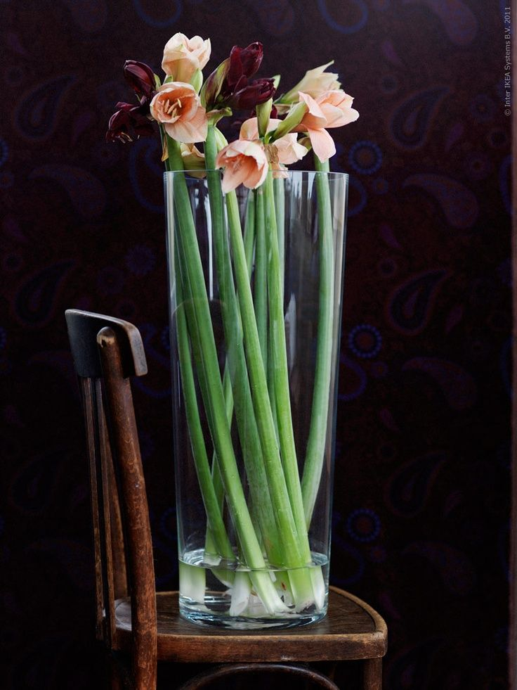 Long Stems In A Tall Glass Vase Like Bladet Make A Striking And