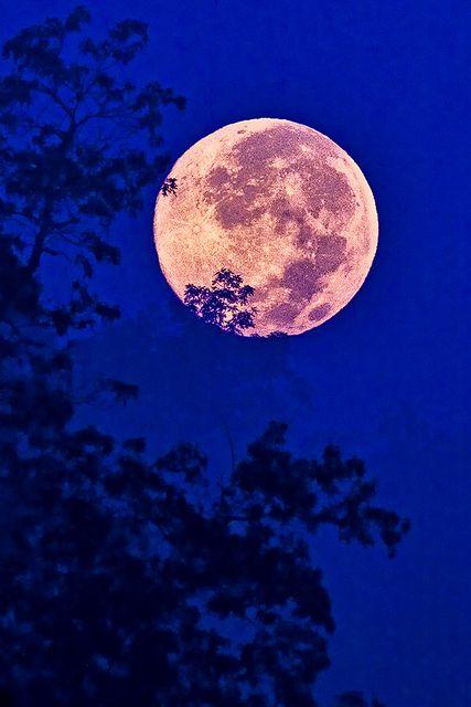 Fly Me To The Moon ○ | Mystic moon, Moon lovers, Stars, moon