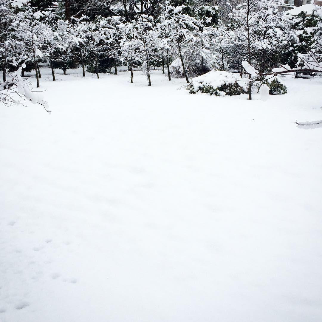 On instagram by ho_synapse #landscape #contratahotel (o) http://ift.tt/1Pcev07 おはようございます 今朝は雪混み過ぎでホームに降りられないので無駄な抵抗はやめました 時間遅れぐらいで着けるのか 一度家に帰るかなあ...... #nature#sky#cloud#tree#snow#Tokyo#Japan#風景#景色#空#雲#木#樹#雪#東京#日本#フユコダチ